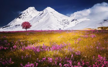 the sky, flowers, grass, clouds, mountains, snow, tree, plants, landscape, alps, meadows