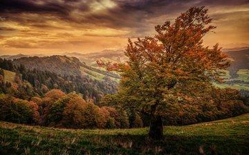 небо, горы, природа, осень, швейцария, деревья