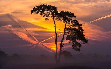 небо, облака, солнце, природа, закат, поле, горизонт, закат солнца, сумерки, дерево
