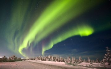 небо, ночь, деревья, снег, природа, лес, зима, звезды, северное сияние, якутия
