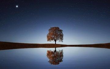 небо, ночь, вода, озеро, дерево, отражение, звезды, горизонт, дерево