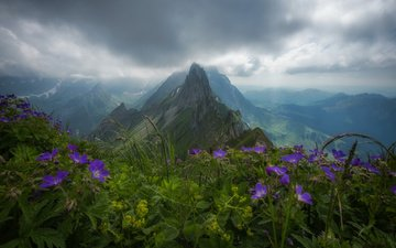 flowers, clouds, mountains, nature, forest, switzerland, alps, peak, overcast