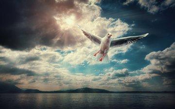 облака, полет, крылья, чайка, птица
