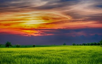 clouds, nature, sunset, field, horizon