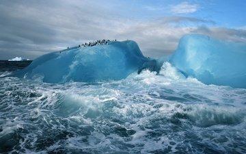 океан, антарктида, пингвины, ледник