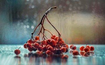 осень, рябина