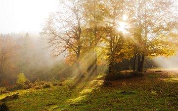 деревья, туман, лучи солнца, осень, дымка, карпаты, vitaly ra