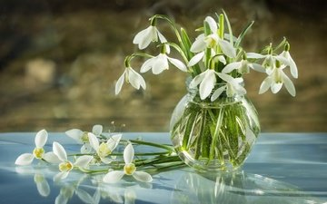 reflection, spring, glass, bank, snowdrops, primroses