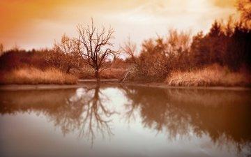 озеро, дерево, отражение, фон, осень