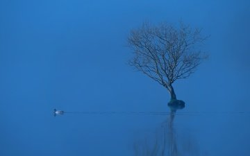 lake, tree, reflection, fog, bird, duck
