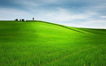 небо, трава, деревья, природа, пейзаж, поле, горизонт, пастбище, холм