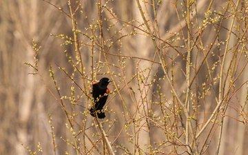 природа, ветки, птица