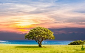 nature, tree, sunset, landscape, sea, horizon