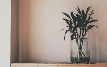 растения, стена, ваза