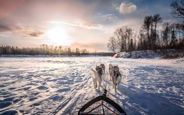 the sky, clouds, river, snow, winter, animals, sleigh, husky, sled, dogs