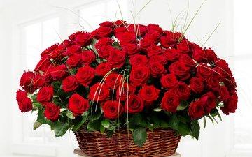 розы, красные, букет