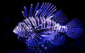 fish, underwater world, lionfish