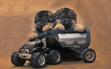 toy, puppies, german shepherd, machine