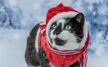 снег, новый год, мордочка, усы, кошка, взгляд, костюм, зеленые глаза, рождество