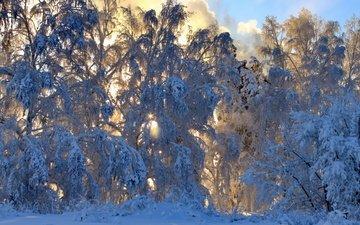 снег, природа, лес, зима, ветки, деревья