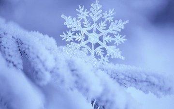 ветка, снег, природа, зима, макро, снежинка