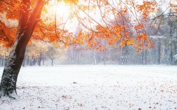snow, nature, winter, park, autumn, autumn leaves, tree
