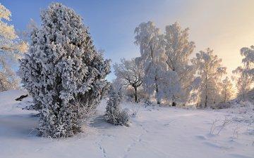 деревья, снег, зима, пейзаж, иней, швеция, деревья