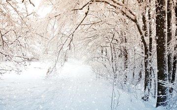деревья, снег, природа, лес, зима, пейзаж, ветки, снегопад
