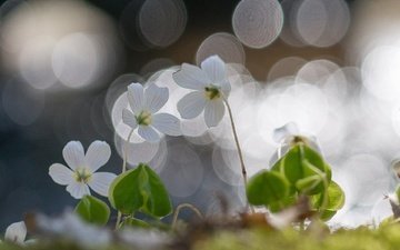 light, flowers, spring