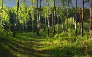 light, grass, lake