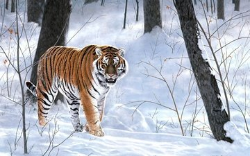 tiger, snow, forest, winter, animals, taiga, painting, emperor of siberia, charles frace
