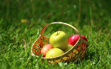 grass, nature, summer, fruit, apples, basket