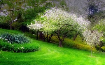 grass, trees, park, spring, flowerbed