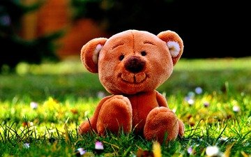 flowers, grass, bear, toy, meadow, teddy bear