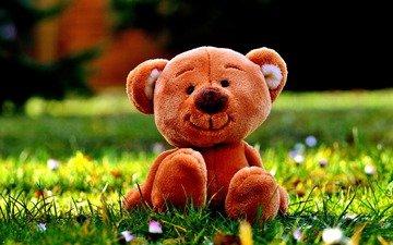цветы, трава, медведь, мишка, игрушка, луг, плюшевый медведь