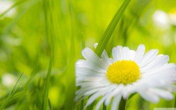 цветы, трава, природа, макро, поле, лепестки, ромашка, луг, растение, стебель, солнечный свет, крупным планом
