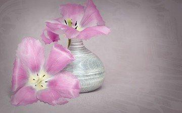 цветы, лепестки, тюльпаны, ваза