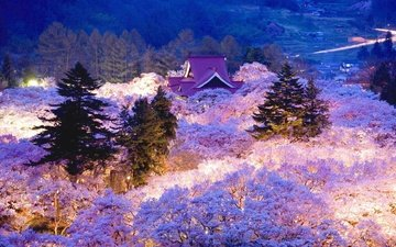 the evening, flowering, japan, spring, sakura