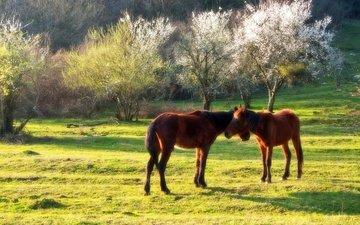 весна, кони