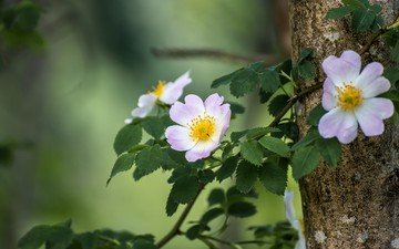 branch, tree, leaves, petals