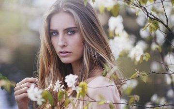 ветки, взгляд, весна, лицо, camille rochette