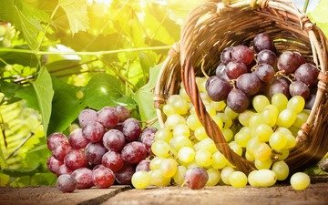 grapes, summer, basket