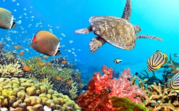 water, fish, turtle, the ocean, corals, tropics, underwater world