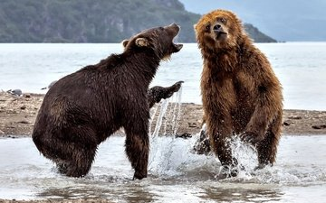 water, river, squirt, bears