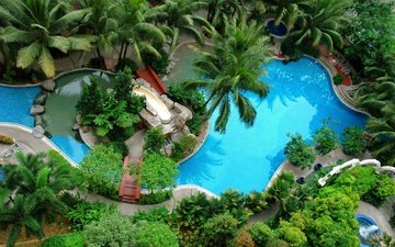 water, nature, greens, the bushes, palm trees, pool, resort, vegetation