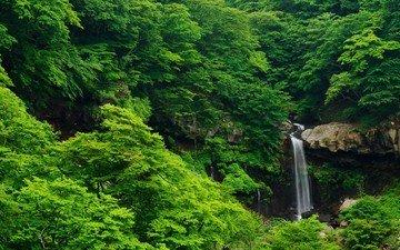 деревья, скалы, природа, камни, лес, водопад, поток, тропики, джунгли, заросли, овраг, растительность