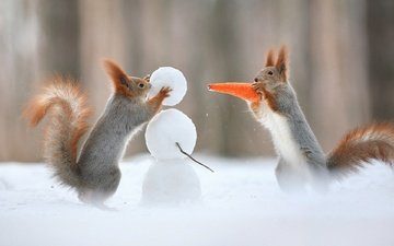 snow, winter, snowman, humor, tail, carrot, proteins, squirrels