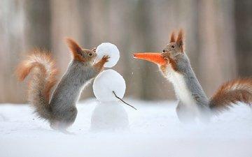 снег, зима, снеговик, юмор, хвост, морковка, белки, белочки
