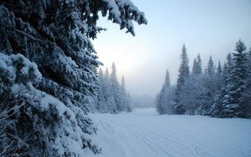 деревья, снег, зима