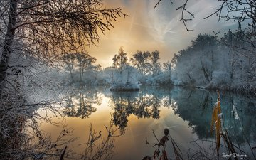 trees, water, morning, fog, frost